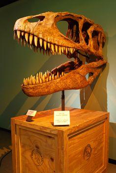 """Carcharodontosaurus_–_""""Shark-Toothed_Reptile"""".jpg (685×1024) - Crétacé, Cénomanien du Maroc. Dinosauria, Saurischia, Theropoda, Allosauroidea, Carcharodontosauridae. Auteur : Franko Fonseca / Flickr. 2008."""