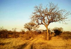 Bushveld scenery in Klaserie Private Game Reserve, Limpopo, South Africa by Martie van Niekerk Landscape Sketch, Landscape Art, Landscape Photography, Country Life, Country Roads, Private Games, Van Niekerk, Game Reserve, Cool Art Drawings
