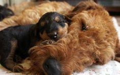 .mum and pup