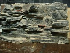 """OMG fake rock wall with """"fossil"""""""