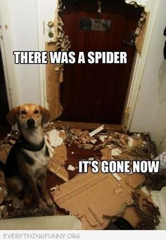 funny caption picture there was a spider its gone now dog destroyed door