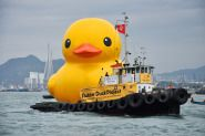 "OH NO!!! Hong Kong's favorite new resident, a giant inflatable duck, took a turn for the worse on Wednesday (5/15/13), looking less like an oversized lovable plaything and more like an unappetizing fried egg on the water. Called ""Rubber Duck,"" it's the product of Dutch artist Florentijn Hofman. The 16.5-meter (54 feet) inflatable sculpture mysteriously lost its mojo overnight, deflated and bobbed lifelessly in Victoria Harbour."