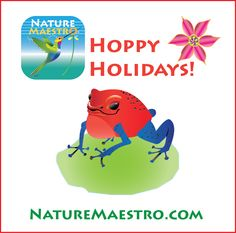 Hoppy Holidays from Nature Maestro! This is an illustration of the Strawberry Poison Dart Frog in the rainforest of Costa Rica.