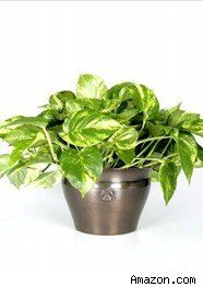 5 Hard To Kill Houseplants And How Not Them