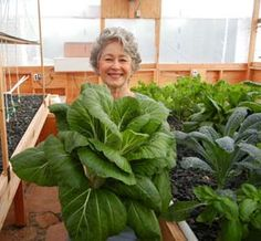Phyllis Davis, Co-Inventor, holding a single head of Bok Choy in this Portable Farms® Aquaponics System that was grown in only 45 DAYS!
