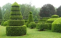 Topiary pretty sure this is Longwood Gardens