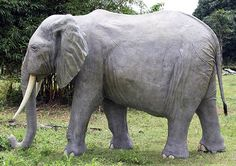 Life Size African Elephant Statue.