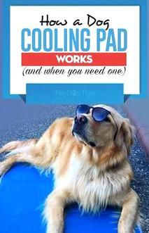 Weve Moving Into Warmer Weather And Keeping Your Dog Cool During