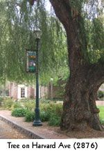 Yep, Claremont truly is the city of trees and PhDs!