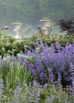 This looks like a painting but it is early morning mist in the garden. Aaahh