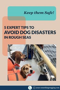 How do you keep your dog safe in rough seas? Follow these tips from a cruiser who has sailed over 7000 nm with her pups. Sailboat Living, Living On A Boat, Dogs On Boats, Sport Fishing Boats, Rough Seas, Weather Information, Kinds Of Dogs, Summer Dog, Pet Travel