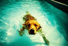 lomography water dog