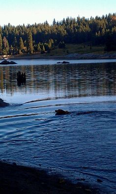 Shaver Lake, CA. One of my most favorite places <3 LOVE