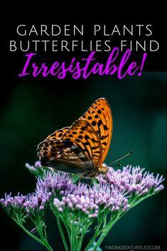 12 Perennials That Butterflies Find Irresistible #Gardening #ButterflyGarden #Organic #Butterflies #Perennials