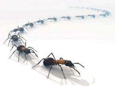 Des pièges à fourmis 100% bio | Eco Ecolo pour Écologie, Bien-être Bio et Médecine Alternative