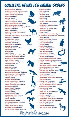Collective Nouns for Animals. I often got stuck wondering what to call a particular group. Fab reference!!