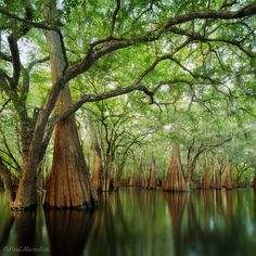 Suwanee River Valley. Florida