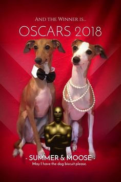 Summer and Moose  Ready for the Oscars  Follow them on Facebook