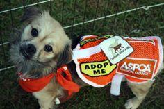 Off-site Adoptions - Charleston Animal Society