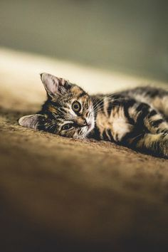 bitty kitty | Flickr - Photo Sharing! Jennifer MacNeill