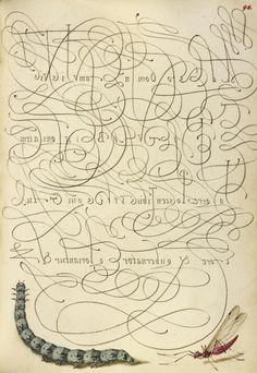 Joris Hoefnagel (illuminator)  [Flemish / Hungarian, 1542 - 1600], and Georg Bocskay (scribe)  [Hungarian, died 1575],                              Caterpillar and Insect,                              Flemish and Hungarian, 1561 - 1562