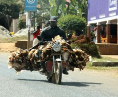 Boda Boda loaded with a passenger and chicken. Kampala, Uganda ...