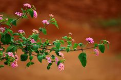 Flowers,leaves,branches