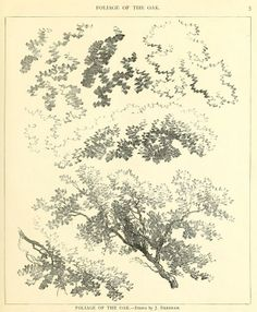 "The side of the pencil has been used to create different foliage patterns. From the public domain book, ""Studies of trees in pencil and in water colors (1895)."" Download or browse the epub, kindle or pdf file here: https://archive.org/stream/studiesoftreesin00need"