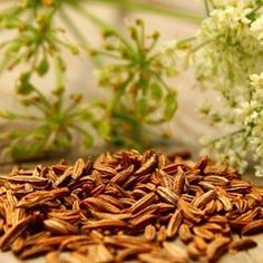 #10over10 #information #caraway #كراوية ...Caraway Caraway also known as meridian fennel and Persian cumin is a plant native to western Asia Europe and North Africa The fruits usually used whole have a pungent anise-like flavor and aroma that comes from essential oils Caraway is also used in desserts liquors casseroles and other foods. In Middle Eastern cuisine caraway  is used in a very famous pudding called Meghli . Caraway is also added to flavor harissa a Tunisian chili pepper paste…