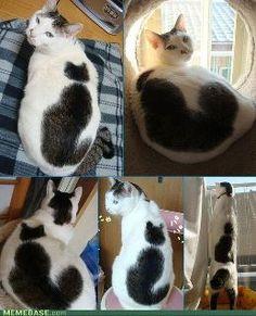 cat on a cat