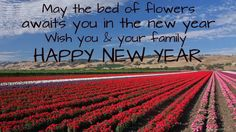 brand new wishes for the new year and images with the prosperous and new wishes to be sent to friends family. Can also be used as desktop wallpaper New Year Wishes Images, Happy New Year Wishes, Friends Family, News, Outdoor, Outdoors, Outdoor Games, The Great Outdoors, Happy New Year