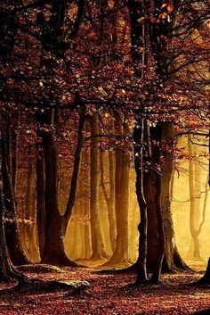 Misty Forest, Scotland