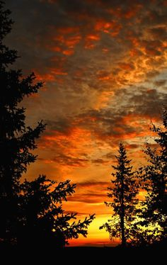 Maybe inspiration for a tattoo: Beautiful skyscape with silhouetted evergreens trees. Beautiful Sunset, Beautiful World, Beautiful Places, Amazing Sunsets, Amazing Nature, Sunset Pictures, Nature Pictures, Nature Scenes, Landscape Photos