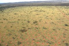Strange grass patterns called fairy circles have been discovered outside of Namibia for the first time.