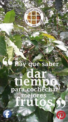 En QuisQueya eco-arte-café estamos de paréntesis patrio 2015. Regresamos el jueves 24 de septiembre a las 9 pm. Por ahora, a dar tiempo...