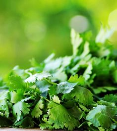 20 Best Benefits Of Cilantro (Dhaniya) For Skin, Hair And Health