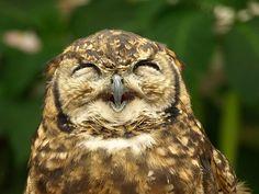 owl's smile!!, por merec