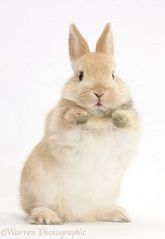 Bunny with paws up photo - WP38923
