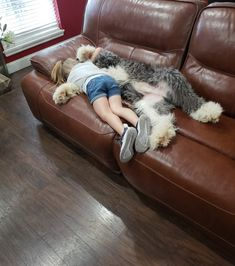 Alex cuddling with his bestie! Animals And Pets, Baby Animals, Cute Animals, Cute Puppies, Cute Dogs, Old English Sheepdog Puppy, English Shepherd, Sheep Dogs, Animals