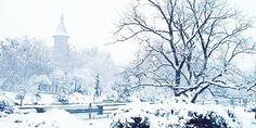 snowflakesandsleighbells:  want more winter/holidays/snow on your dash? follow snowflakesandsleighbells!