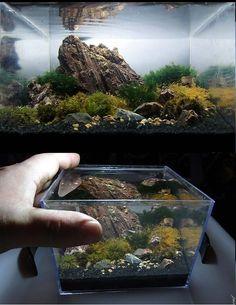 Aquarium Oblivion - aquaminiatura