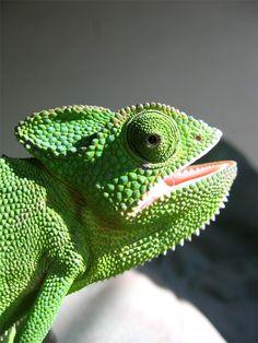 Textuur--Kameleon: want het is Zacht & Bobbelig