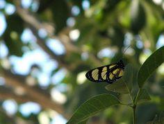 Butterfly (Borboleta) by Thalita Carvalho ϟ, via Flickr