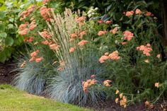 Front border idea: Yarrow (Achillea) 'Fanal' and blue fescue grass (Festuca glauca) 'Elijah Blue'