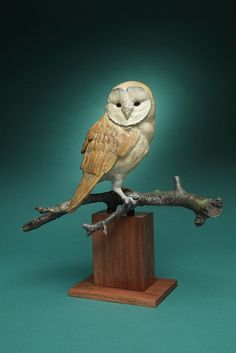 Barn Owl by Melissa Cooper