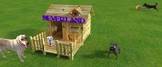 Neverland, associazione cinofila