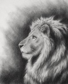 The Lion of Judah (Jesus), portrait of a lion's head (profile). This is an illustration for a book about Aslan from The Chronicles of Narnia.