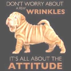 Thought this was cute( for Shar-Pei people) !!