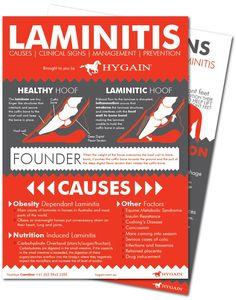 fact-sheet-laminitis-free-download