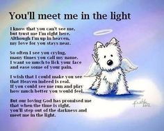 YOU WILL CRY... In memory of a pet quotes quote miss you sad death pets sad quotes heaven in memory